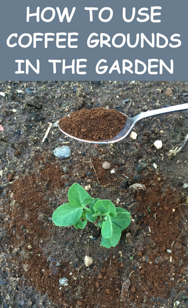 How To Use Coffee Grounds In The Garden Gardentipz Com