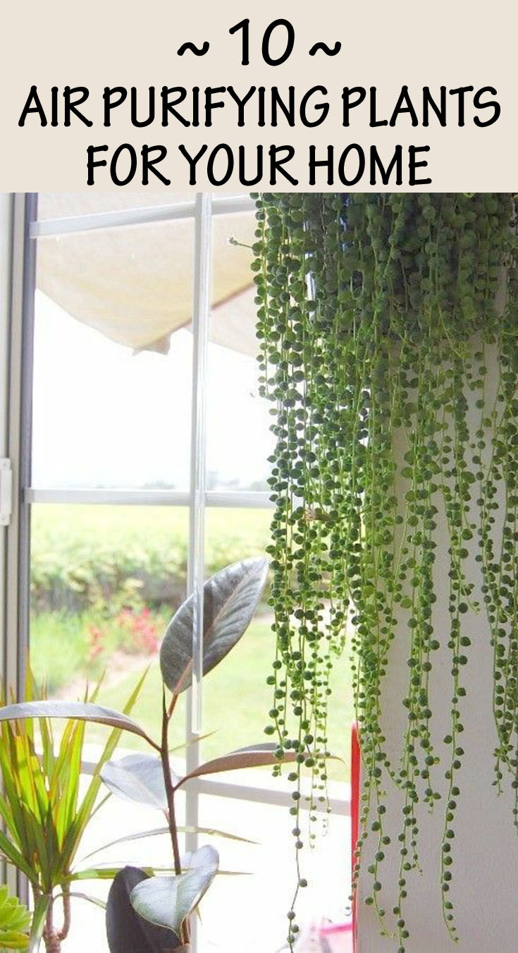 Air Purifying Plants For Bedroom: 10 Air Purifying Plants For Your Home