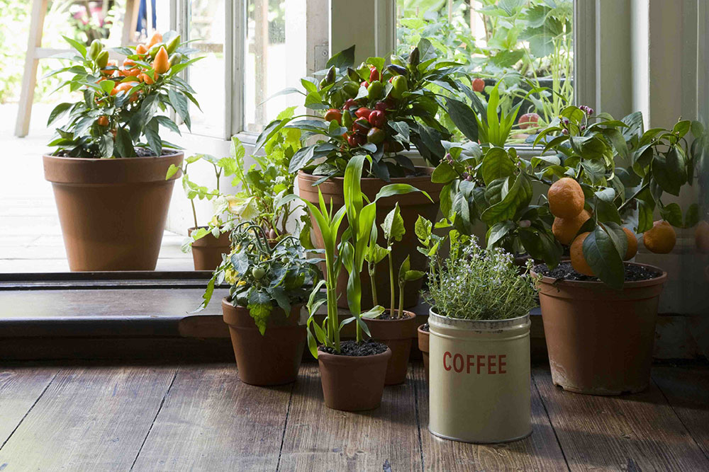 10 air purifying plants for your home for Plante interieur haute