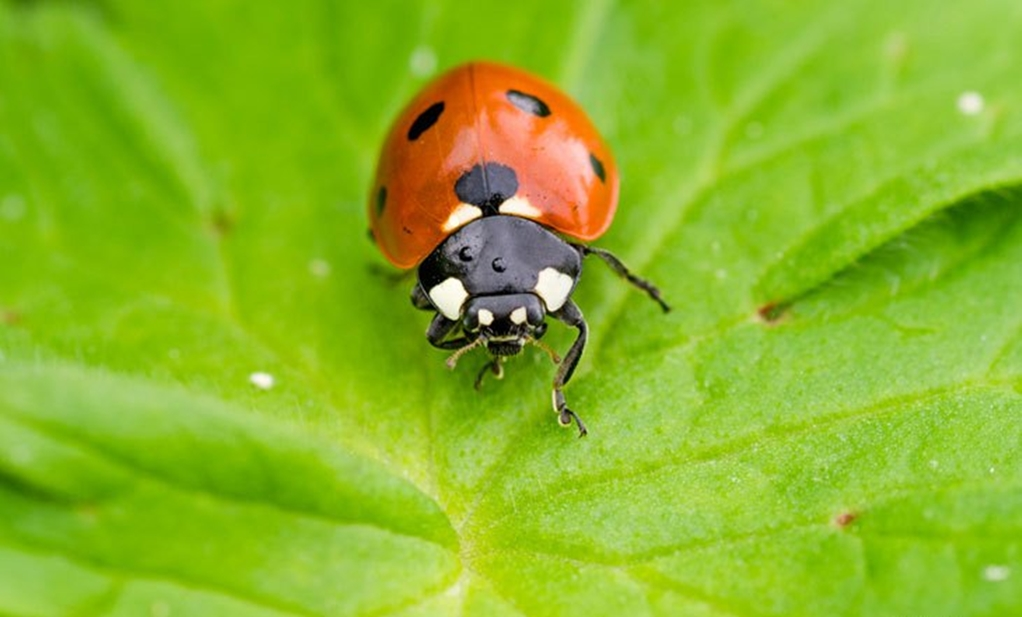 Beneficial Insects For Your Garden Gardentipz Com