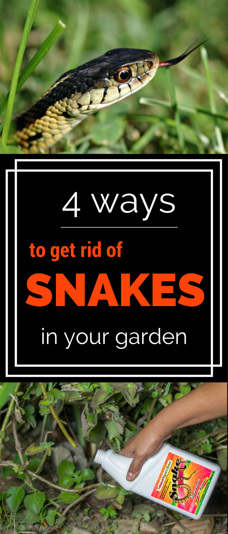 4 Ways To Get Rid Of Snakes In Your Garden