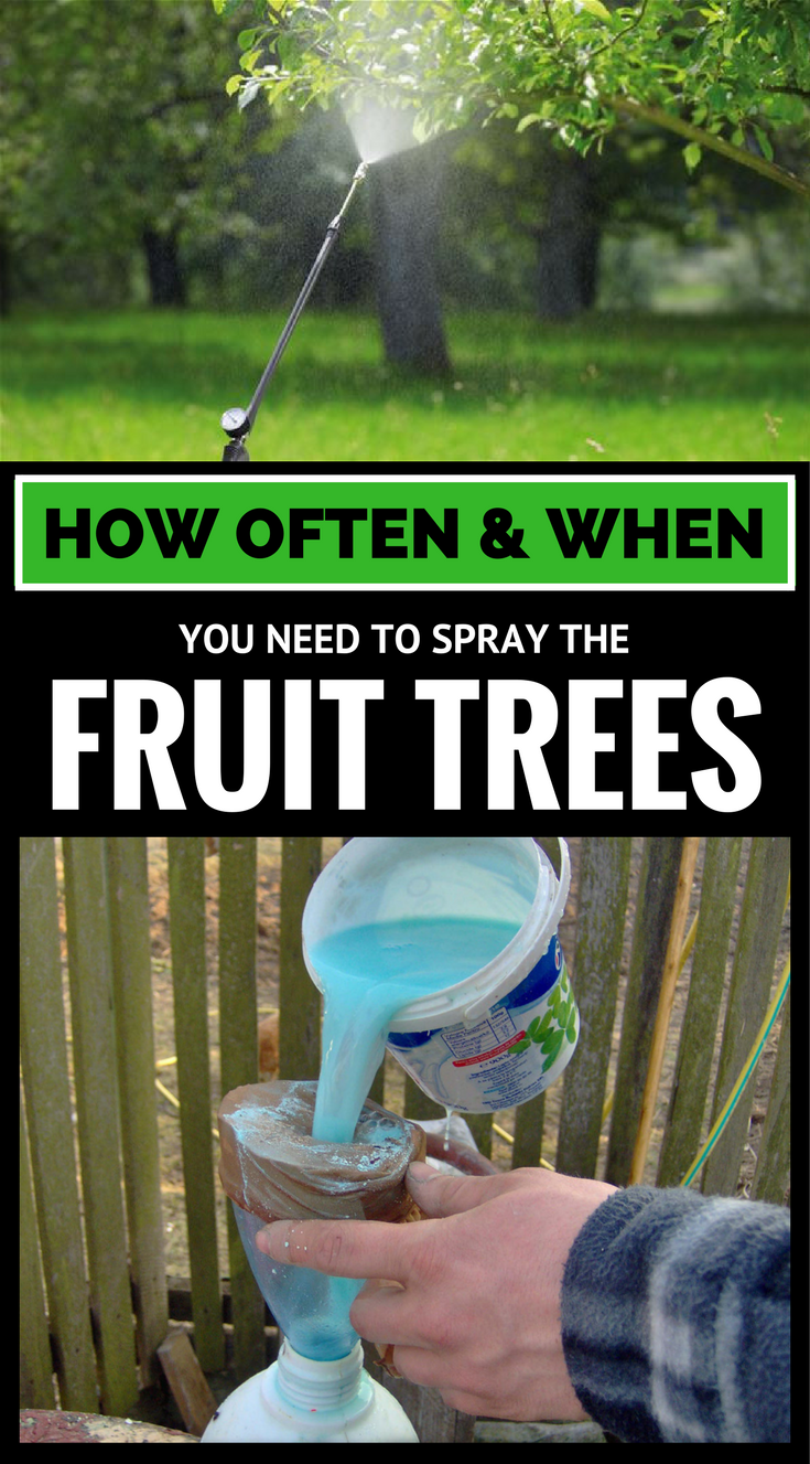 How often when you need to spray the fruit trees - How often should you water your garden ...