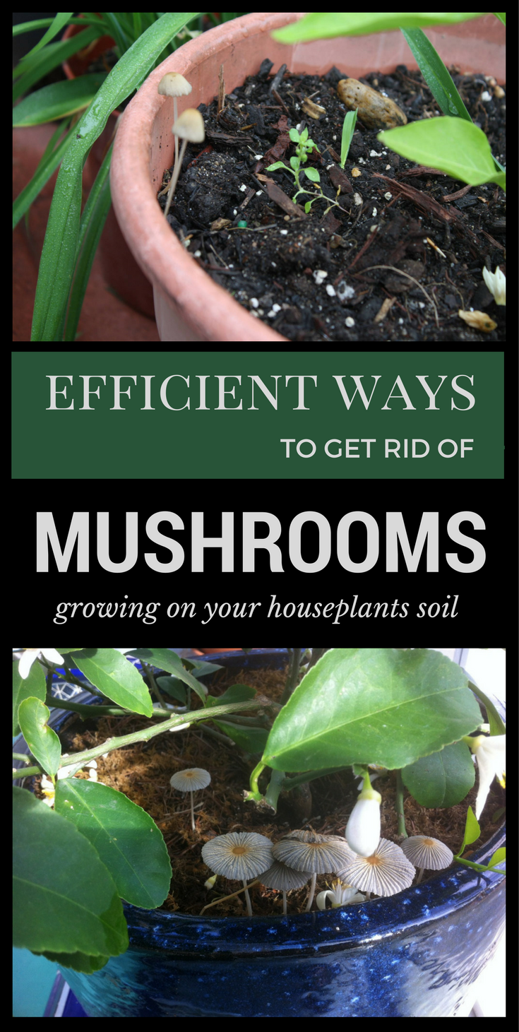 How To Get Rid Of Mushrooms Naturally