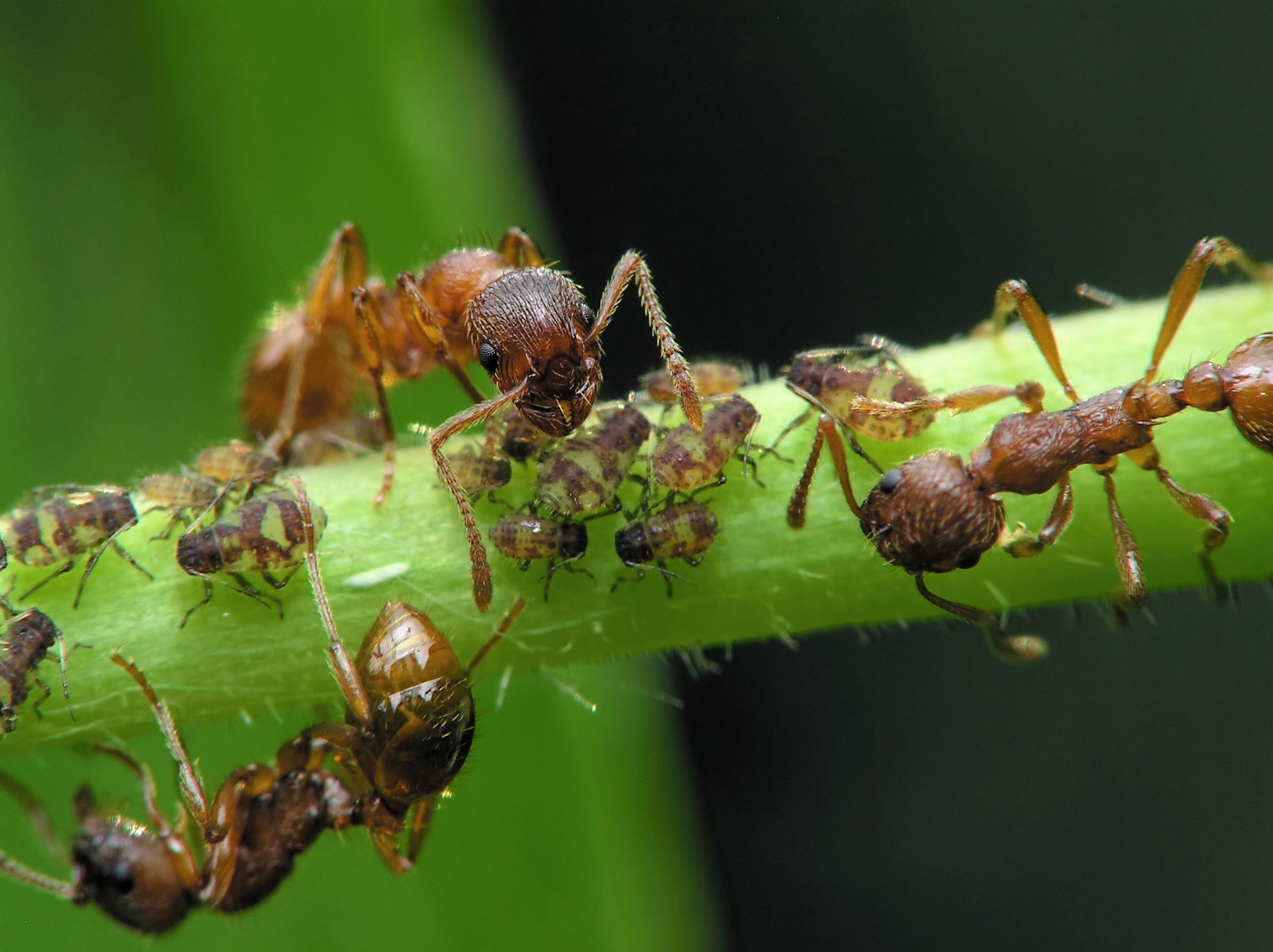 Natural Ways To Keep Ants From Vegetables