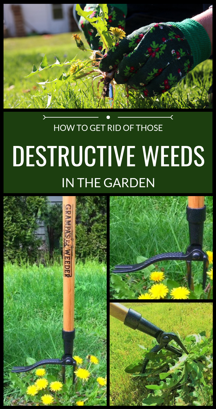 How to get rid of those destructive weeds in the garden for How to get rid of weeds in garden