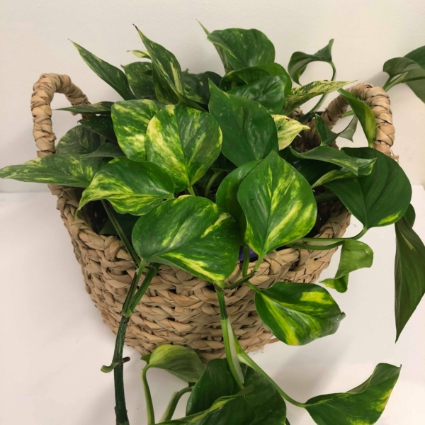 Stop Counting Sheep Easy To Care Indoor Plants That Will