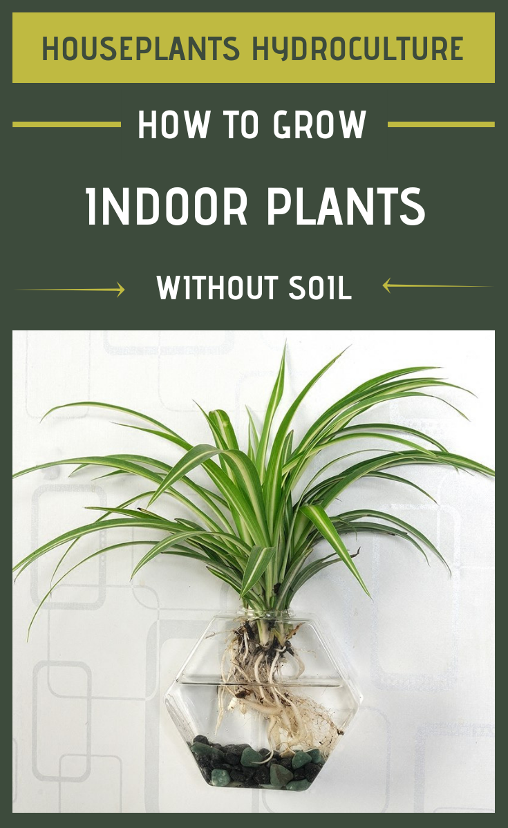 houseplants hydroculture how to grow indoor plants without soil. Black Bedroom Furniture Sets. Home Design Ideas