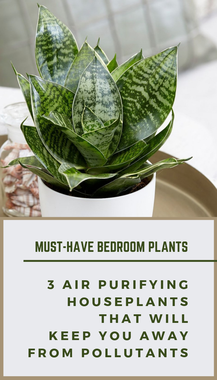 Must Have Bedroom Plants 3 Air Purifying Houseplants That