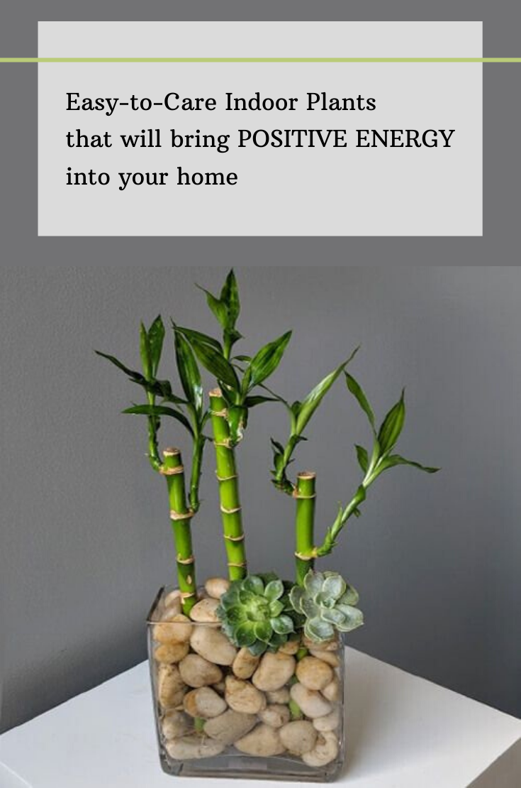 Easy To Care Indoor Plants That Will Bring Positive Energy